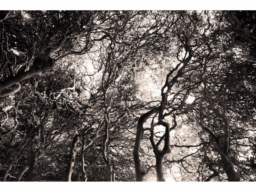 Photographic print ELUSIVE LUMINOSITY II - FINE ART by 99 Limited Editions