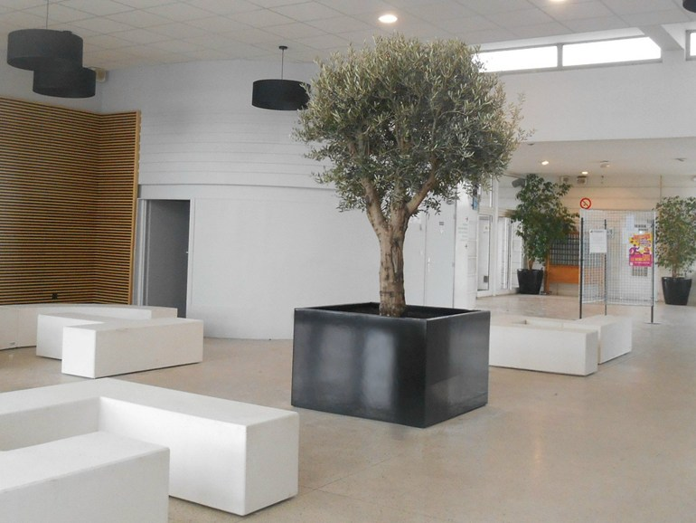 Planter Tree tub for Indoor - IMAGE'IN by ATELIER SO GREEN