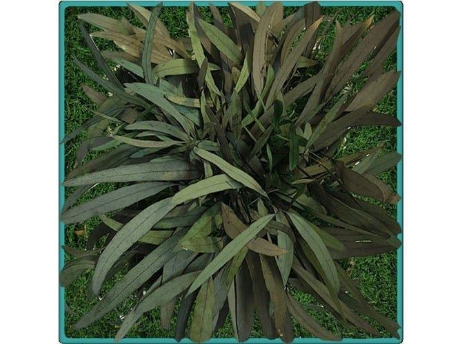 Vegetal frame MONTSOURIS by Add Plus