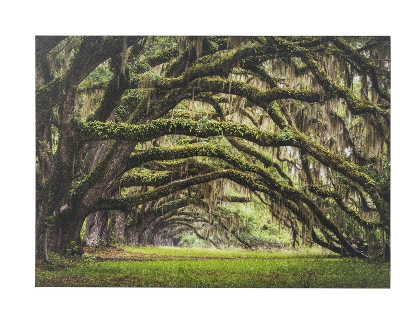 Photographic print NATURE TREES - KARE-DESIGN