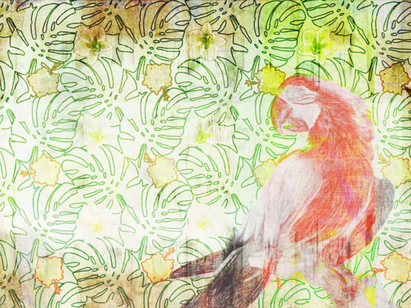 Wallpaper PARROT SKETCH - Wallpepper
