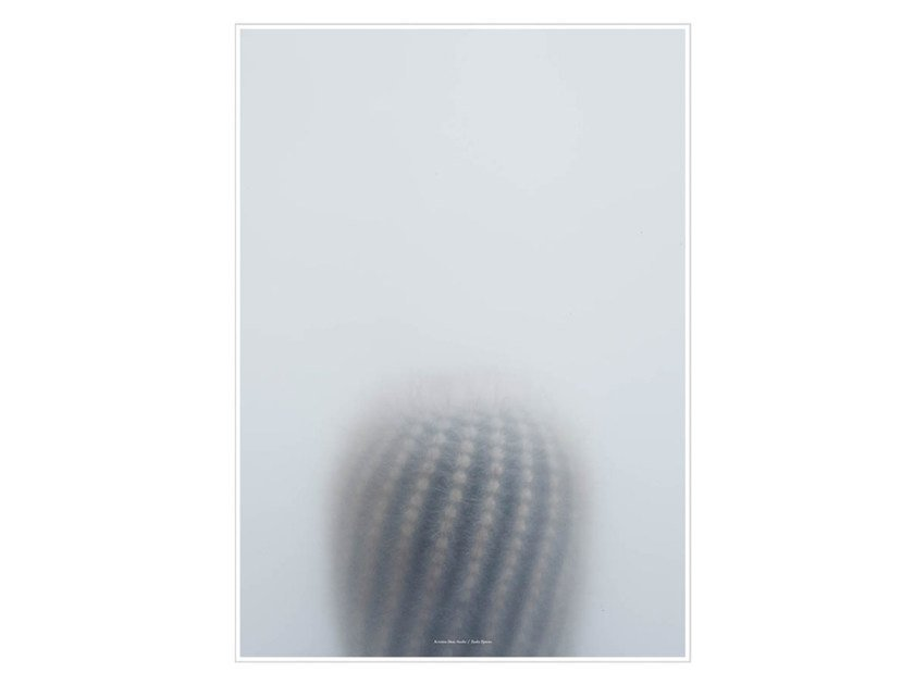 Photographic print BALL CACTUS I by Kristina Dam Studio