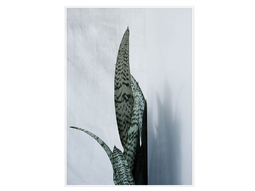 Stampa fotografica BAYONET PLANT I by Kristina Dam Studio