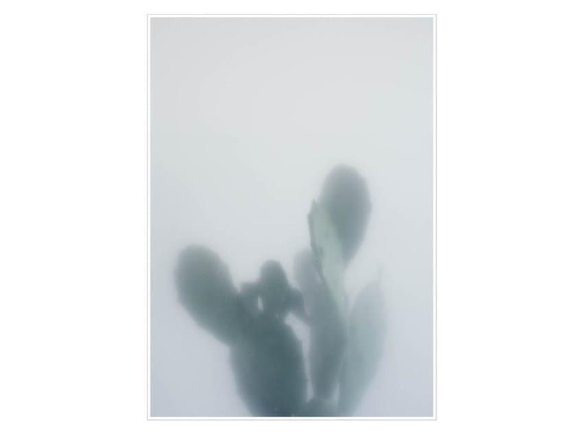 Photographic print CACTUS I - Kristina Dam Studio