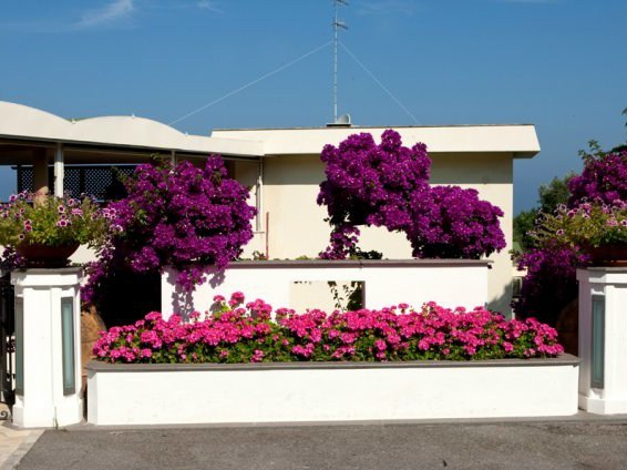 Reinforced concrete Flower pot Flower pot - F.lli Maresca