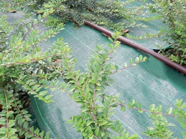 Professional mulching cover GREEN COVER - TENAX