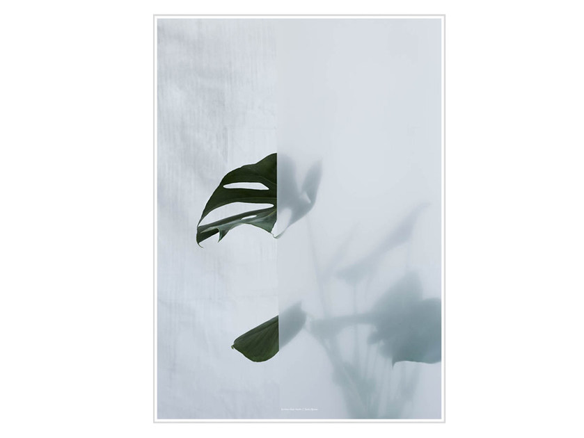 Photographic print SPLIT-LEAF PHILODENDRON I - Kristina Dam Studio