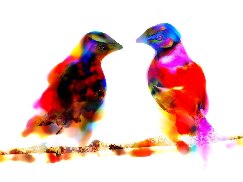 Photographic print TWO BIRDS - FINE ART PHOTOGRAPHY by 99 Limited Editions