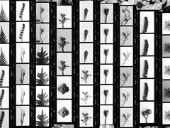 - Paper wallpaper CONTACT SHEET 02 - Wallpepper