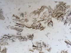 Pavimento/rivestimento in pietra naturaleFOSSIL - NATURALMENTE PUGLIA