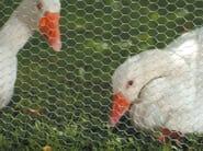Hexagonal wire mesh fencing EXAMET - TENAX