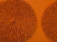 Wool felt decorative acoustical panels TULIP RADIAL | Wool felt decorative acoustical panels - Anne Kyyrö Quinn