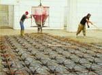 Cassero a perdere per vespai GRANCHIO - PROJECT FOR BUILDING