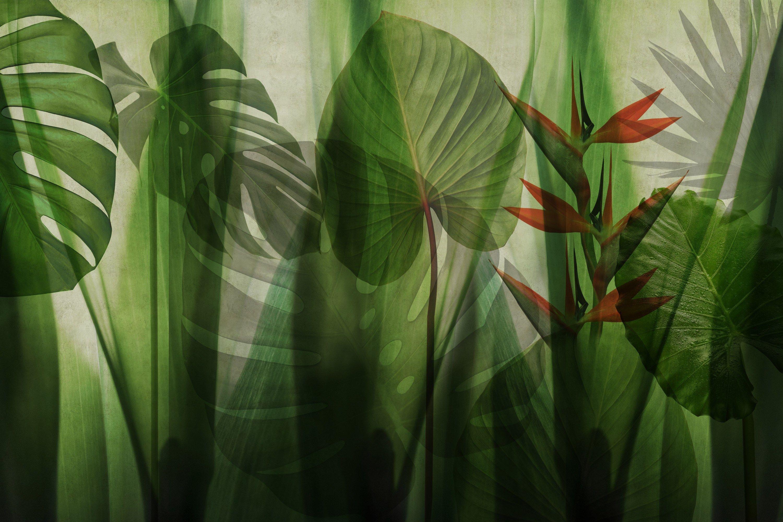 Washable vinyl wallpaper equatorial jungle by glamora for Washable wallpaper
