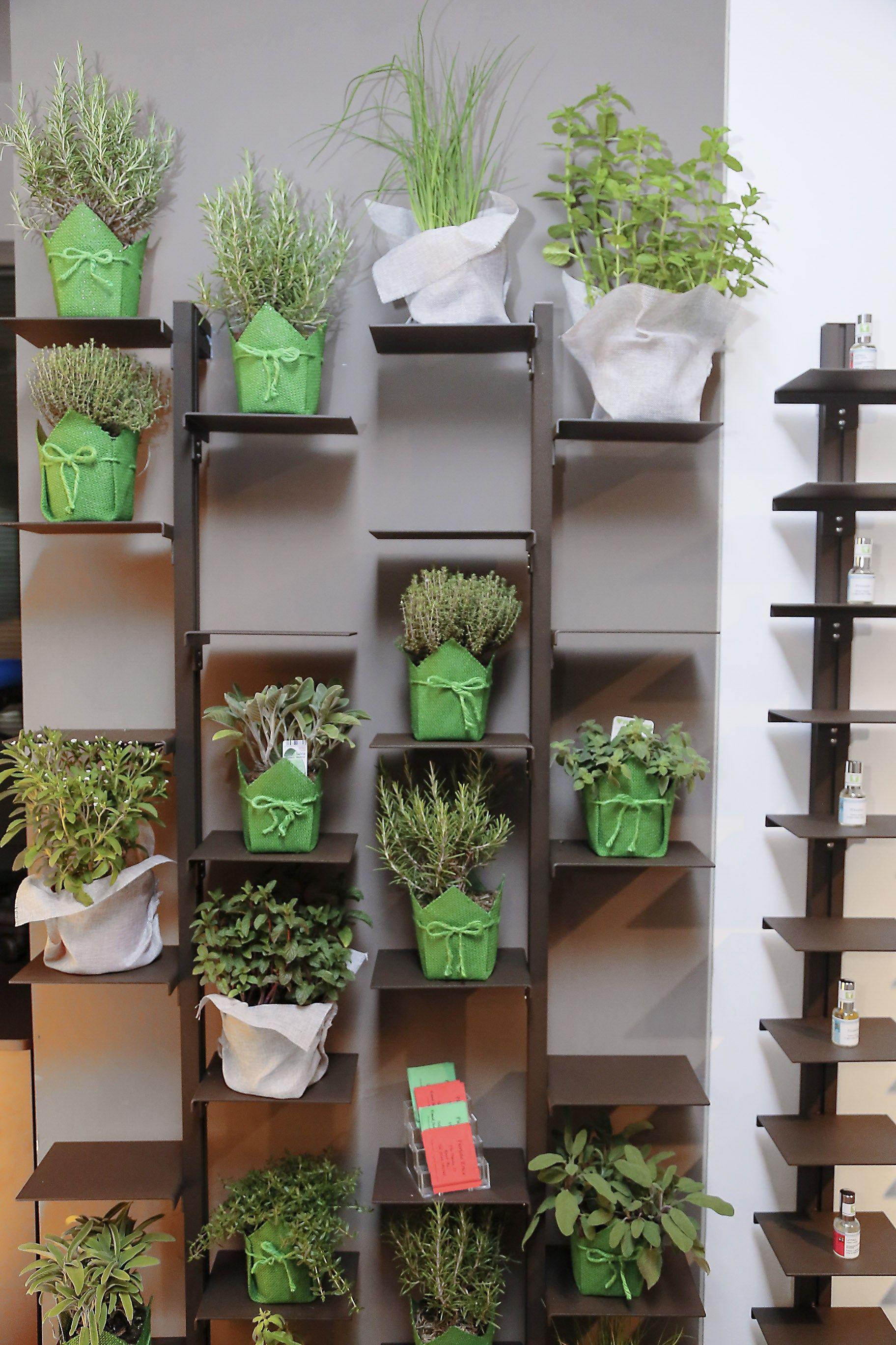 Terrazza idee divisori for Green arreda