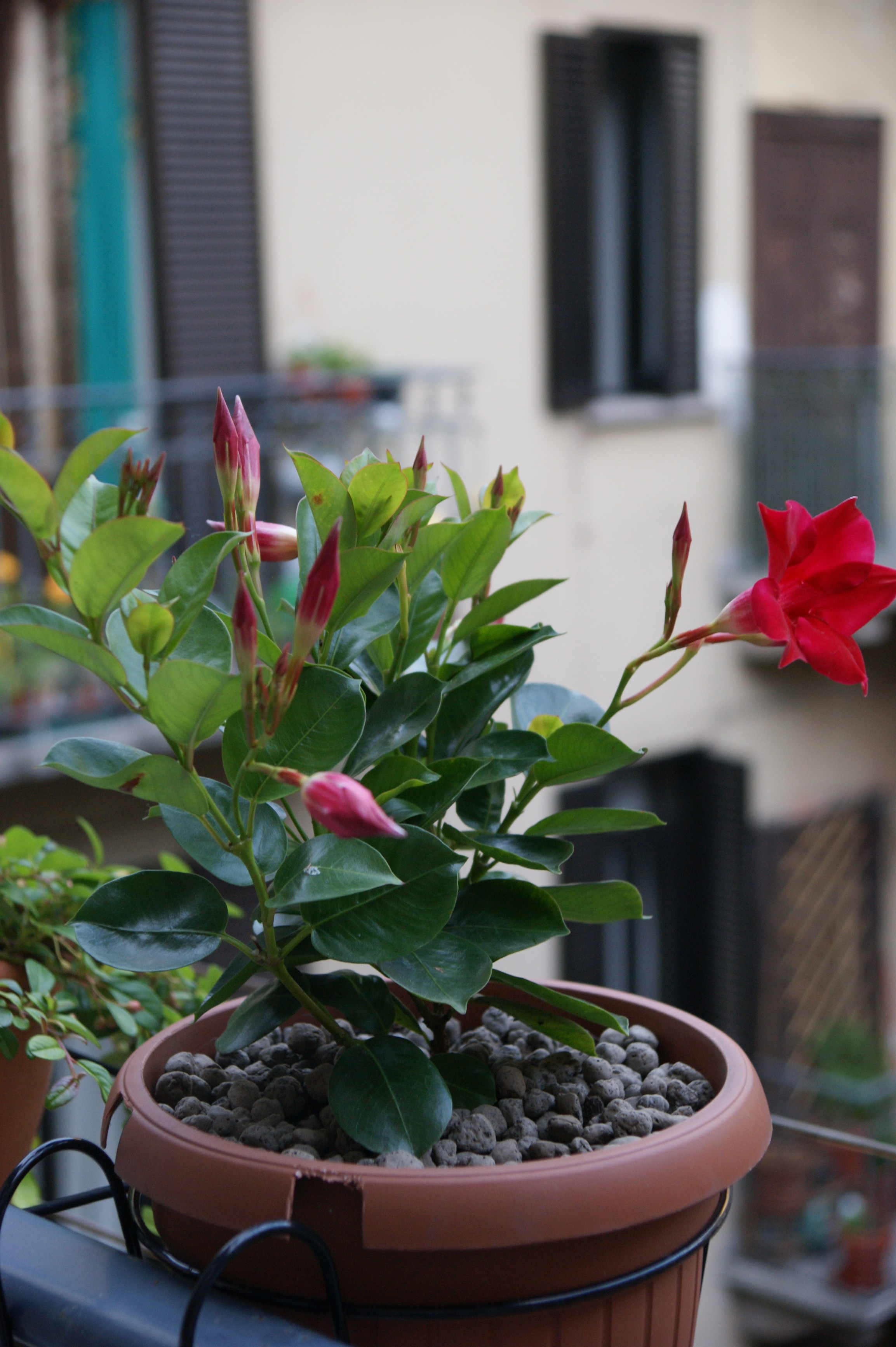 Argilla espansa a ph specifico per giardini pensili for Giardini pensili