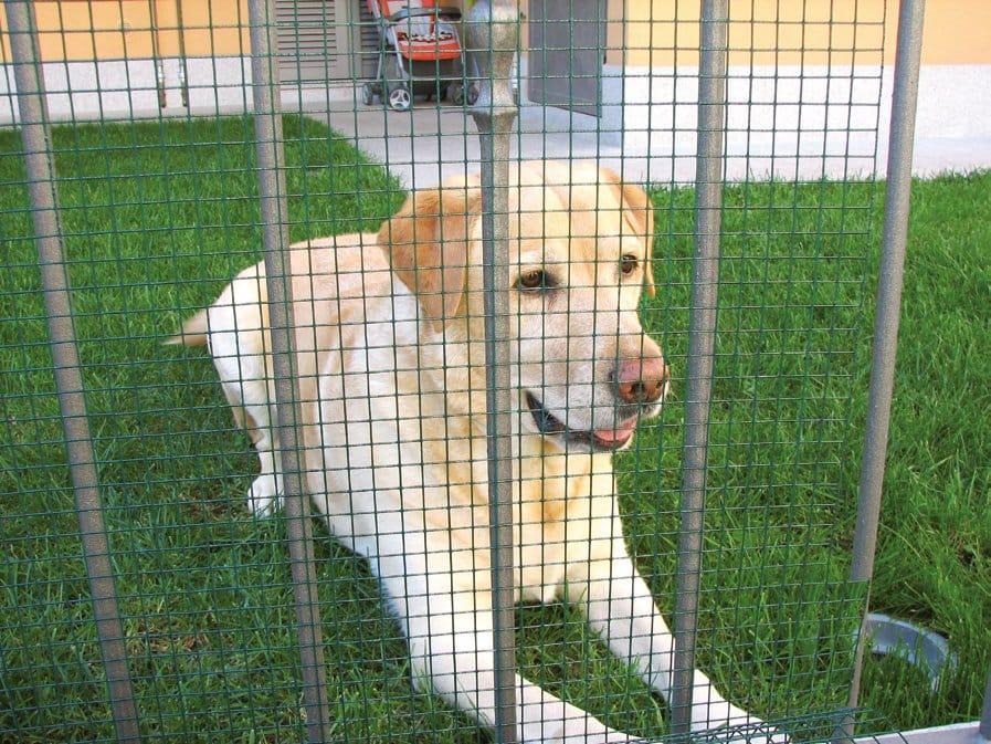 Casa immobiliare accessori recinzione metallica plastificata for Recinto cani leroy merlin