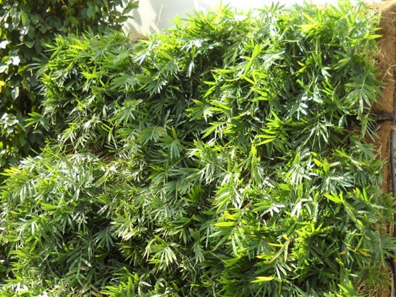 grade de jardim vertical:GRADE PARA JARDIM VERTICAL PERLIFENCE® BY PERLITE ITALIANA
