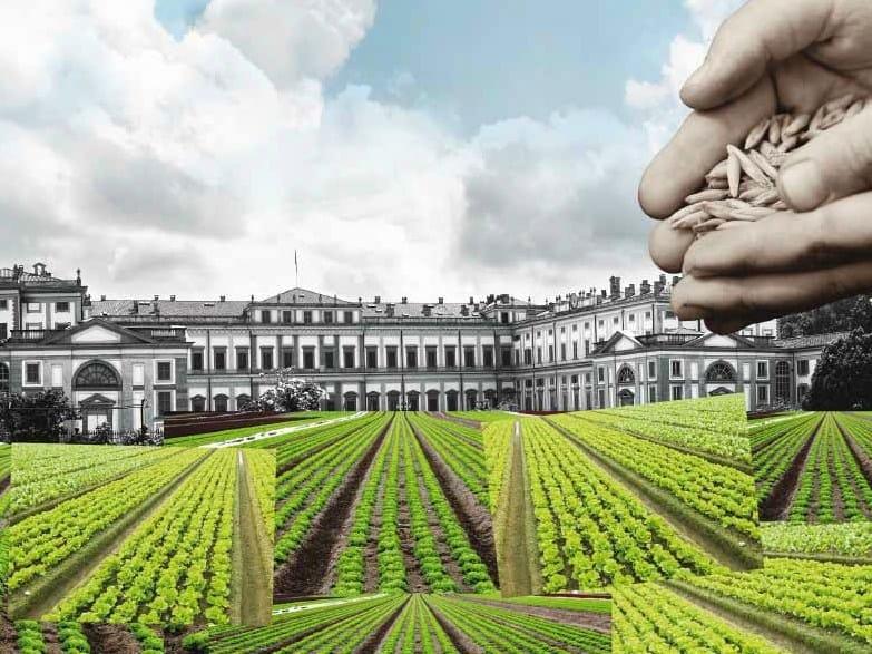Ultimi giorni per partecipare al concorso per un orto in città
