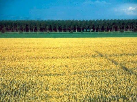 Imu Agricola: incertezza sulla scadenza del 26 gennaio
