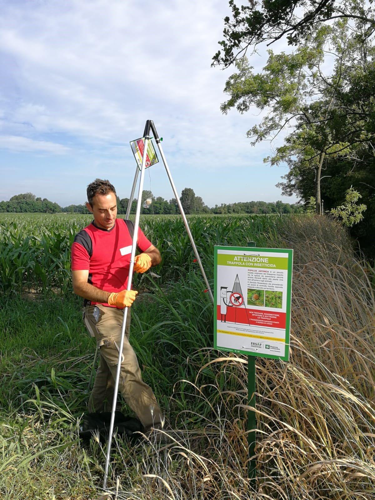 TRINET di BASF contribuisce al contenimento della Popillia japonica sul territorio italiano