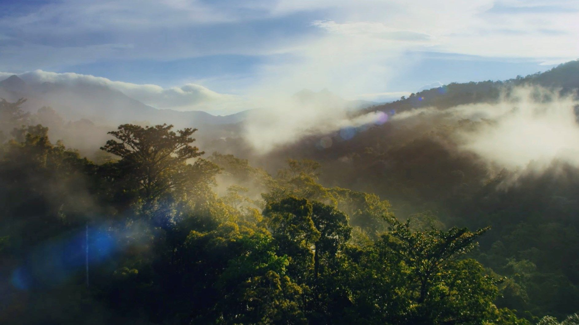 Il Gruppo VELUX, con il WWF, si impegna ad azzerare la sua intera impronta ecologica con il piano Lifetime Carbon Neutral