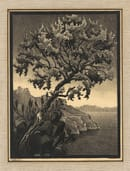 Albero di Carrube (a Ravello), 1932 - All M.C. Escher works © 2018 The M.C. Escher Company. All rights reserved