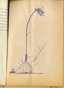 11. Bul-Bo lamp - original sketch