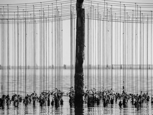Foto vincitrice del premio fotografico Nazionale Mitilicoltori della Spezia 2029 © Marco Maccagnani