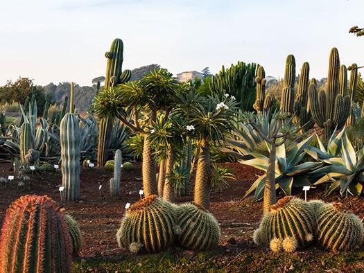 Giardino botanico - foto Alfio Garozzo