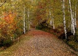 Biella riqualifica la zona armonica nel Parco di Pollone
