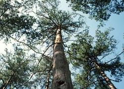 AHEC, il legno di latifoglie americane rispetta l'ambiente