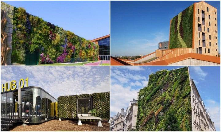 Pareti verdi, giardini verticali che sfidano la gravità