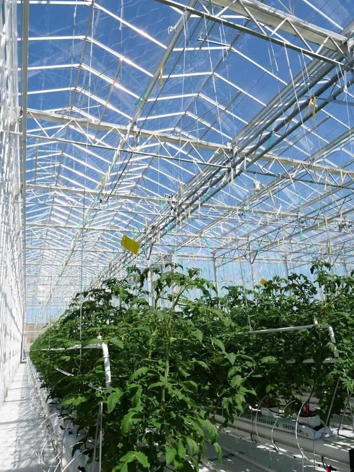 Una fattoria urbana sul tetto: primato mondiale per Derbigum nel settore dell'agricoltura urbana