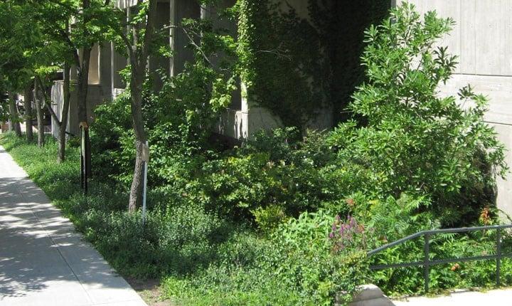 Rain garden - By DASonnenfeld - Own work, CC BY-SA 4.0, httpscommons.wikimedia.orgwindex.phpcurid=34567378