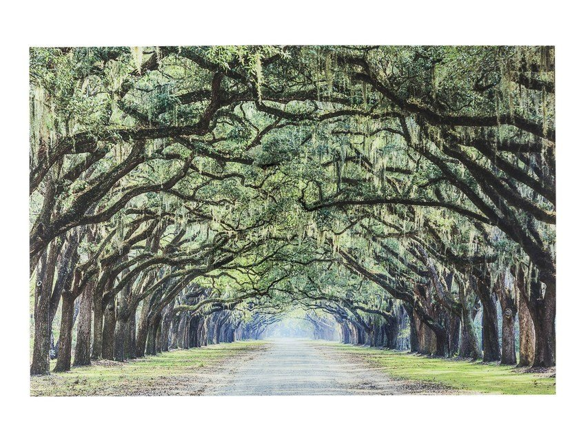 Photographic print / Print on glass AVENUE OF TREES by KARE-DESIGN