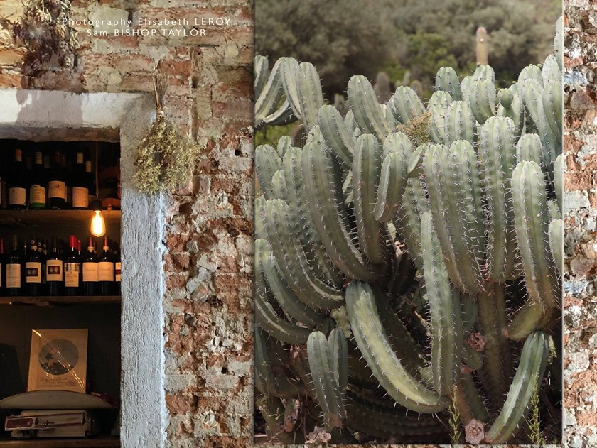 Photographic print CACTUS - FIRENZE by Elisabeth Leroy Collections
