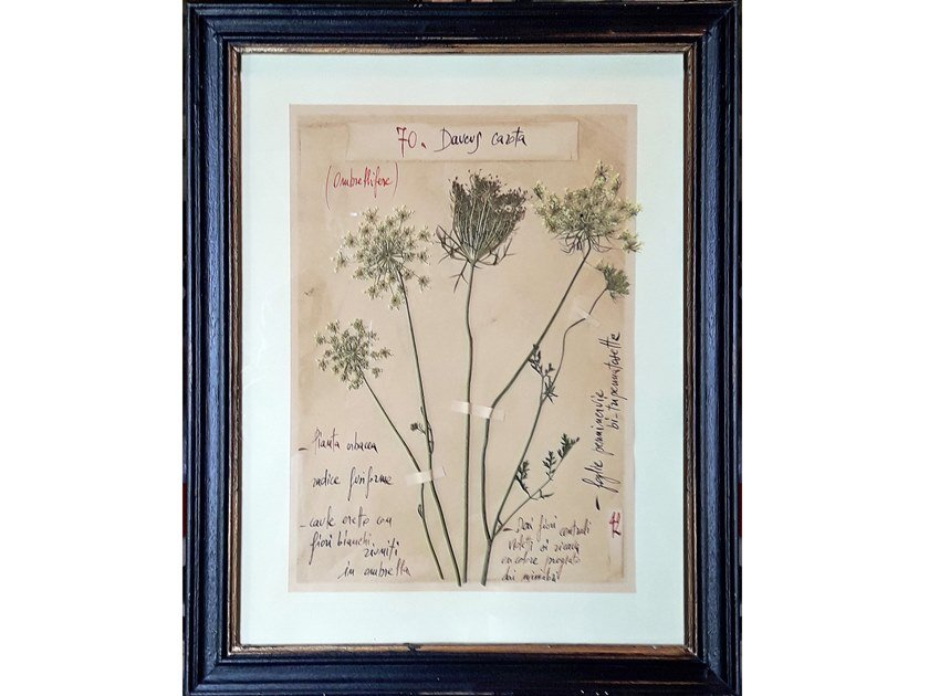 Decorative panel DAUCUS CAROTA by OFFICINA NATURALIS