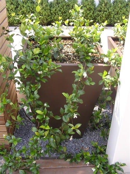 Custom plate planter DEMY 1 by Martin Design