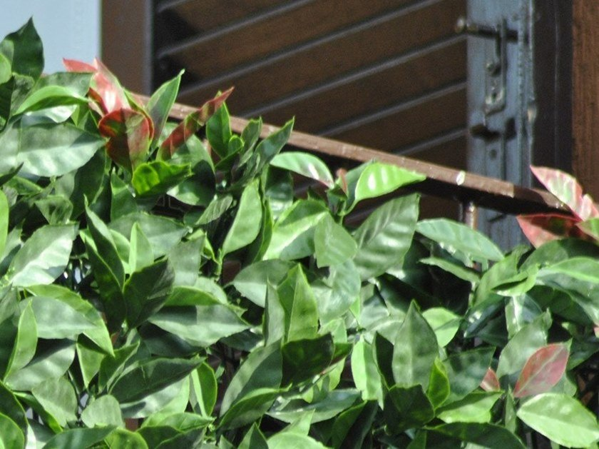 Artificial hedge DIVY 3D PANEL PHOTINIA by TENAX