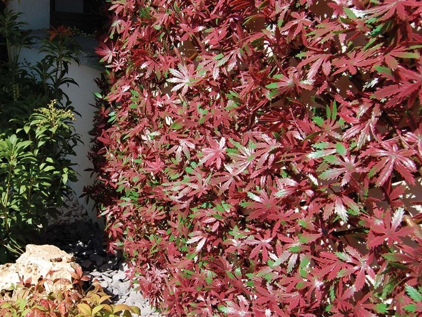 Artificial hedge DIVY 3D X-TENS RED ACER by TENAX