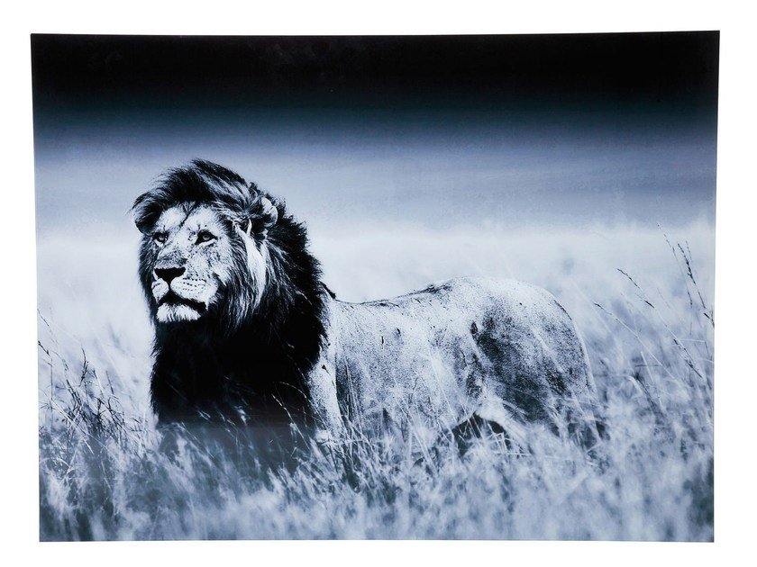 Photographic print LION KING STANDING by KARE-DESIGN
