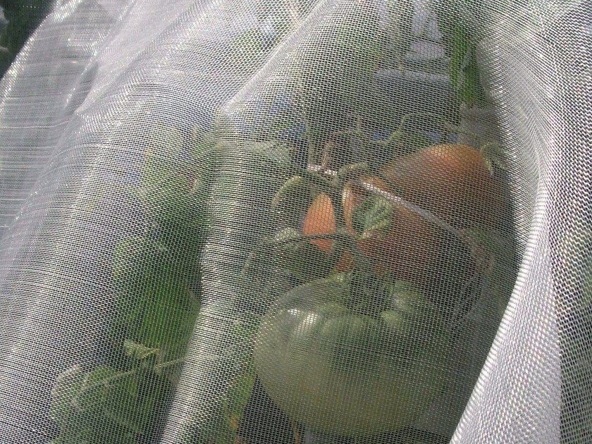 Garden and plant netting MICROFENDER by TENAX