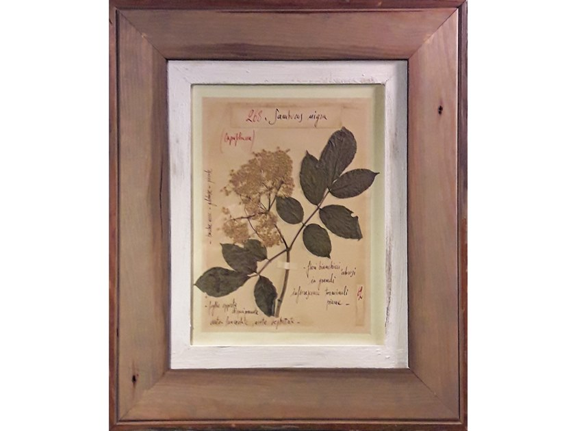 Herbarium with natural flowers and handicraft wooden frame SAMBUCUS NIGRA by OFFICINA NATURALIS