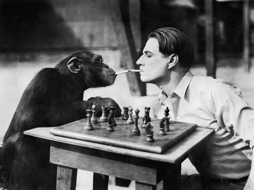 Stampa fotografica CHIMPANZEE AND A YOUNG MAN PLAYING CHESS by Artphotolimited