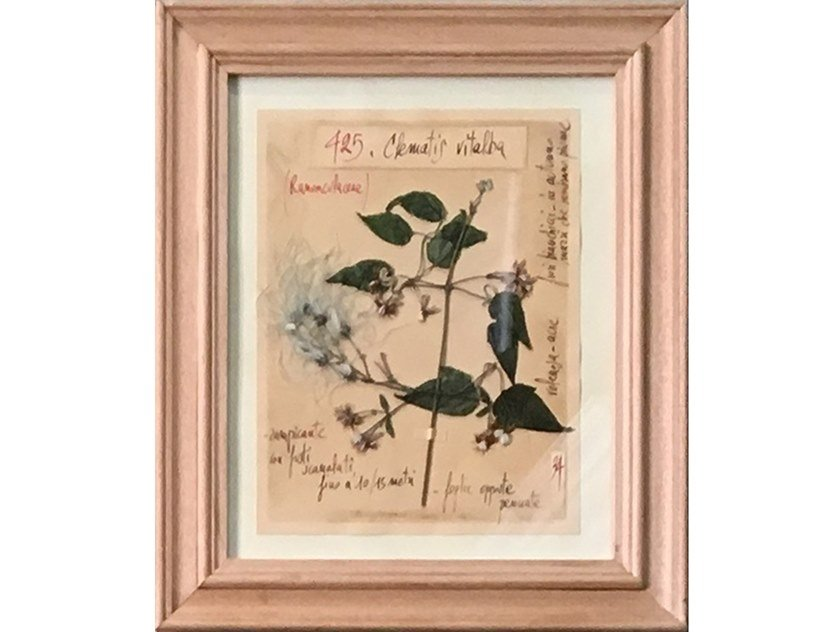 Herbarium with natural flowers and handicraft wooden frame CLEMATIS VITALBA by OFFICINA NATURALIS