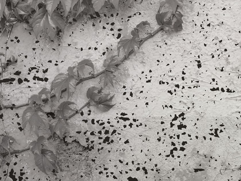 Fire retardant Digital printing wallpaper EDERA by NANNI GIANCARLO & C.