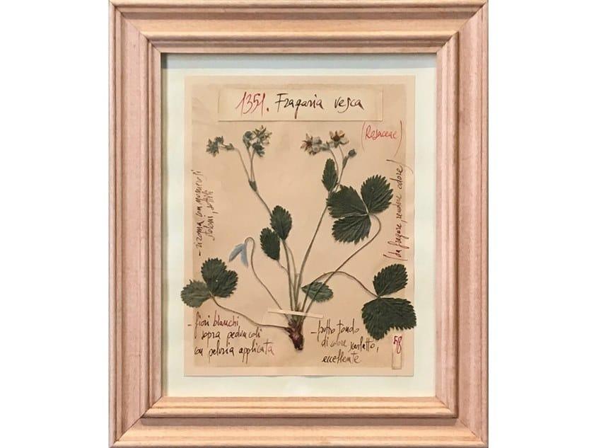 Erbario di fiori naturali con cornice artigianale in legno FRAGARIA VESCA by OFFICINA NATURALIS