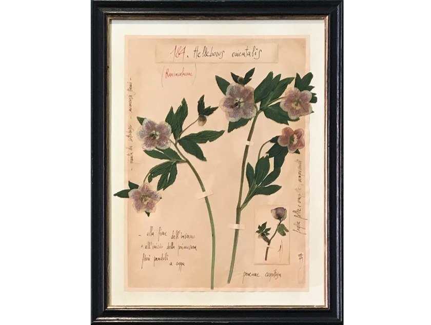 Decorative panel HELLEBORUS ORIENTALIS by OFFICINA NATURALIS