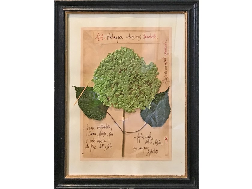 Herbarium with natural flowers and handicraft wooden frame HYDRANGEA ANNABELLE by OFFICINA NATURALIS